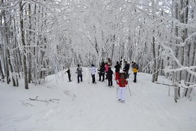 campigna_inverno_1